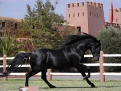 le cheval berber